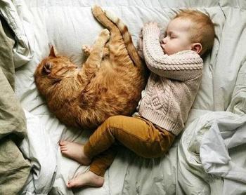 Безопасно ли ребенку спать вместе с домашним питомцем?