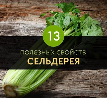 13 полезных свойств сельдерея