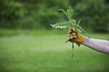 Как бороться с сорняком на огороде