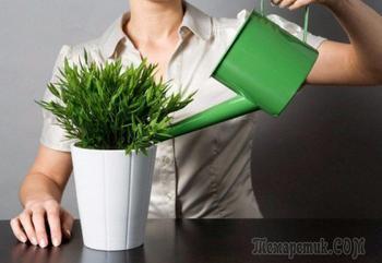 Завелись цветочные мошки в квартире — как бороться