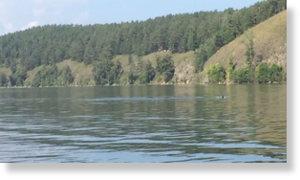Уральская «Несси»? В водах озера Тургояк замечен гигантский черный змей