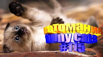 Смешные коты | Приколы с котами | Видео про котов | Котомания #115