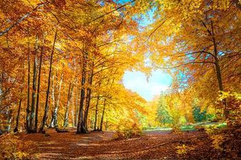 Любовный гороскоп на неделю 26 октября – 1 ноября: счастливый период для Рака