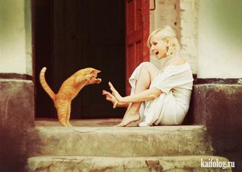 Фото приколы про котов
