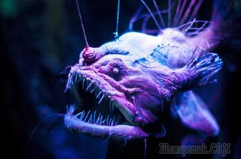 Эти глубоководные создания будто сошли со страниц фантастических книг