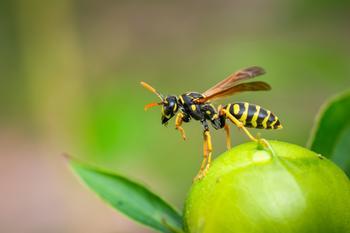 Необычный гороскоп: тотемное насекомое по знаку зодиака