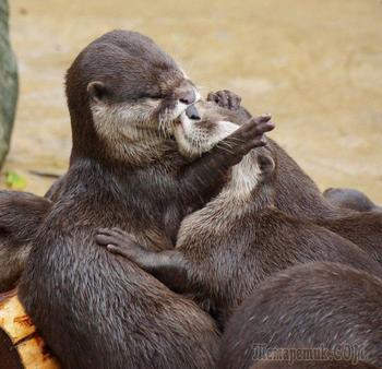 Как животные проявляют чувства