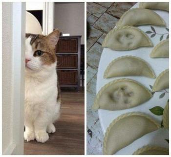 22 потрясающих котов, которые сломали систему