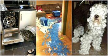 Один дома: 14 жизненных фотографий о том, что бывает, когда мужчины и дети остаются без присмотра