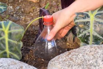 8 садовых трюков, которые сослужат добрую службу на даче и дома