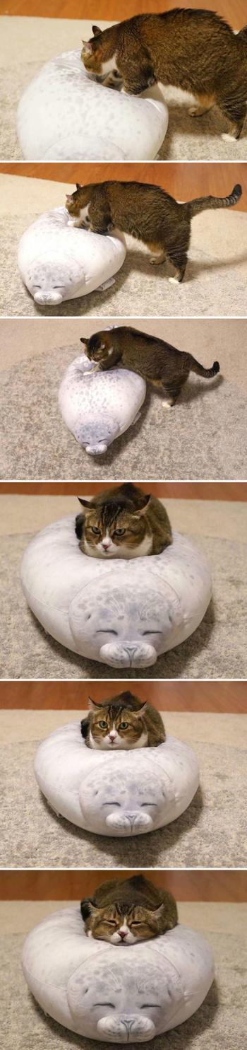 Ситуации, где главные роли сыграли наши любимые кошки