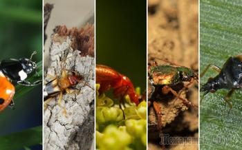 Полезные и вредные жуки в огороде – фото, описания, что с ними делать