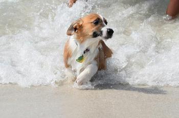 Собаки, которые очень боятся воды