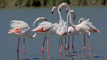 Топ-10 долгожителей животного мира