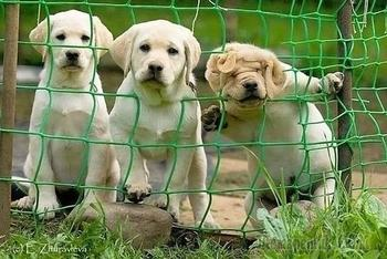 20 фото нелепых моментов из жизни собак. Часть 1
