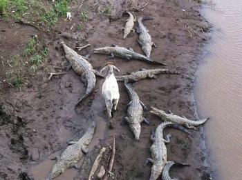 Грачи обнаглели: животные, которым все до фонаря