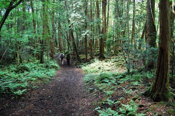 Мистическая Япония: лес самоубийц  Аокигахара