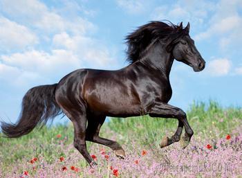 Конь мой...(Стих)