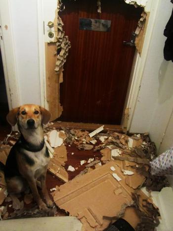 Доказательства того, что не стоит оставлять домашних животных на хозяйстве