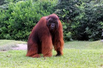 Осеннее настроение: Фотографии редких животных рыжего окраса
