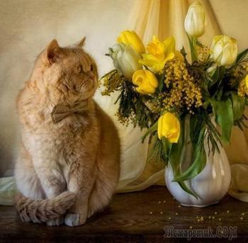 Необычные фотонатюрморты Элеоноры Григорьевой. Коты, мышки и цветы