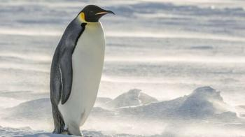 В Новой Зеландии найдены останки гигантского пингвина