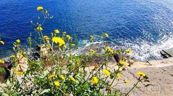 Мальта. 06. Валлетта. Море, гавань, сады и еще другое