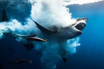 12 лучших подводных фотографии с конкурса «Through Your Lens»