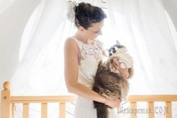 Фотограф снимает невест с их кошками и результат не может быть более очаровательным