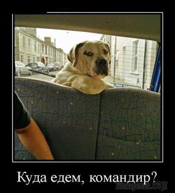 Демотиваторы и смешные картинки из  жизни