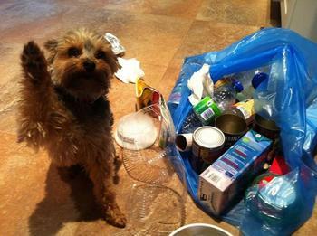 Что делают собаки, пока хозяина нет дома