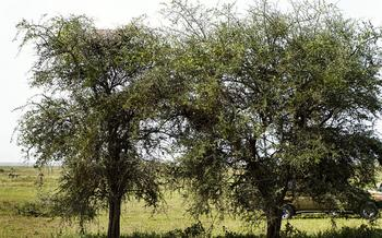 А вы сможете найти леопарда, спрятавшегося на этой фотографии?