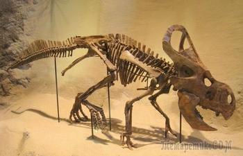 Самые причудливые ископаемые, которые переворачивают представления о древнем мире