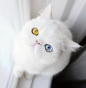 Крошечный котёнок с гетерохромией