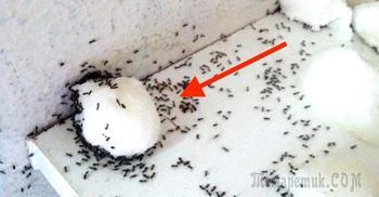 Самое просто и эффективное средство от муравьев в доме