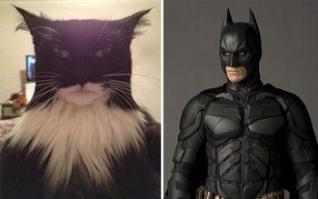 20 котов, похожих на кого угодно, только не на самих себя