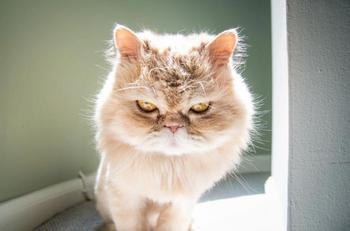 Коты, которые умеют выражать эмоции не хуже людей