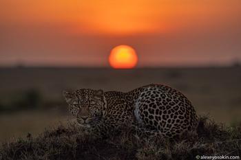 Животные национального парка Масаи-Мара