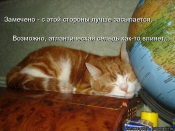 Свежая котоматрица для настроения