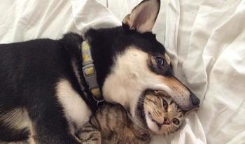 20 фото собак и кошек, которые сумели подружиться
