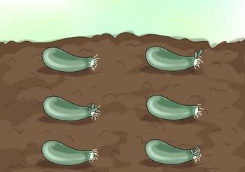 Размножение суккулентов: технология, способы и оптимальные сроки