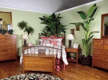 Цветы для спальни, какие цветы подходят для спальни