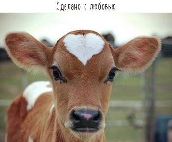 У природы любой окрас в моде! 16 фото животных