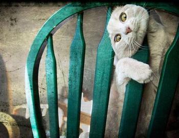 За что боролись, на то и напоролись! 20 котиков-хулиганов, которые получили по заслугам за шалости