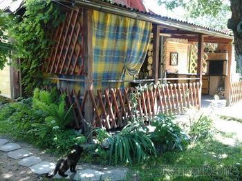 Дача: ежики и котики на участке у леса