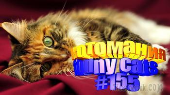 Смешные коты | Приколы с котами | Видео про котов | Котомания # 155