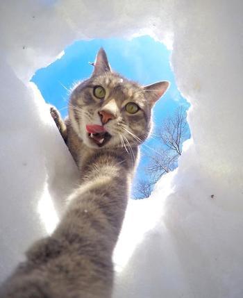 Мэнни — кот, который делает селфи круче, чем вы
