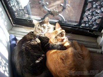 Несколько фотографий котов, которые любят тепло больше всего на свете
