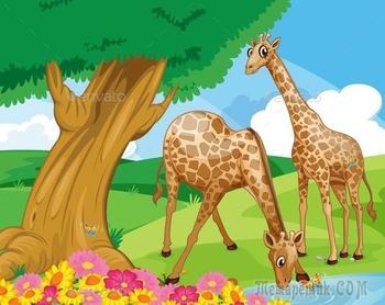 Не везёт жирафам