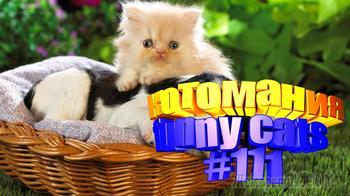 Смешные коты | Приколы с котами | Видео про котов | Котомания #111